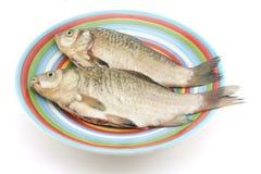 Purified carp Stock Image