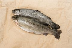 Purified fish on craft paper. Rainbow trout gutted royalty free stock photo