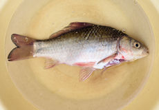 Purified fish is in a dish Royalty Free Stock Photo