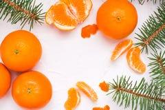 Purified mandarynka plasterki, całe mandarynki i jodeł gałąź, obraz stock