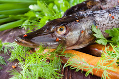 Purified pike on the board and greens Stock Images