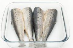 Purified sardine whole bird Royalty Free Stock Image