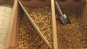 Purified seeds of sesame seeds, peanuts, sunflowers and peanuts. Horizontal pan  from right to left stock footage