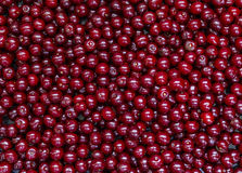 Purified and washed cherries in a box Royalty Free Stock Images