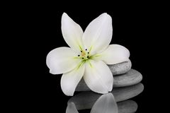 Purity. Stunning lily with stones on a reflective background Stock Image