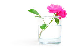 Purity. Rosehip flower in a glass of clear water, purity or freshness concept Stock Image