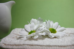 Purity. Three white daisies on a towel with a green background Stock Photography