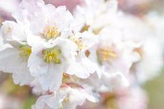 purity Fotografia de Stock