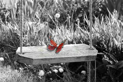 Purity. Red butterfly on black and white background.. concept purity Royalty Free Stock Photos