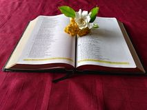 Purity of Gods Word. A lovely shot of a bible with beautiful white and yellow flowers that represent purity laying between the pages Stock Photography