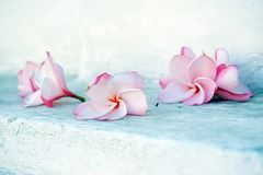 Purity and grace Stock Photography