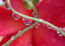 Purity of the rain. The reflection of flowers in raindrop Royalty Free Stock Image
