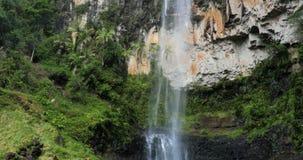 Purling Brook Falls in Springbrook National Park, Australia. Purling Brook Falls in Springbrook National Park, Queensland, Australia stock video footage