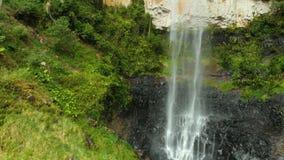 Purling Brook Falls in Springbrook National Park, Australia. Purling Brook Falls in Springbrook National Park, Queensland, Australia stock video