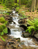 Brook in the forrest Stock Images