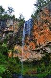 Purling strumyków spadki, Springbrook park narodowy Obrazy Royalty Free
