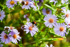 Purlpe kwiaty Zdjęcie Stock