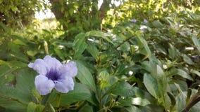 Purpel blomma i en trädgård Arkivfoton