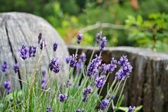 Purper bloeidetail met houten voorwerpen op achtergrond Royalty-vrije Stock Foto