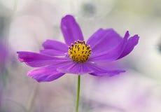 Purper bloemclose-up op een zachte achtergrond Selectieve nadruk Stock Foto