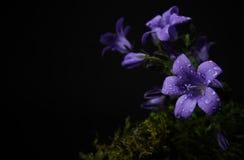 Purper bloemen en mos Royalty-vrije Stock Fotografie