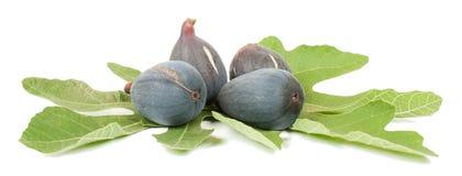 Purper fig. Stock Foto