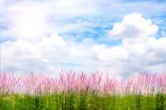 Purper Gras en Sunny Day Royalty-vrije Stock Afbeeldingen