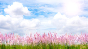Purper Gras en Sunny Day Stock Afbeeldingen