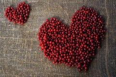 Purper hart van rode aalbesbessen die op organisch schone landelijk worden verzameld Royalty-vrije Stock Foto