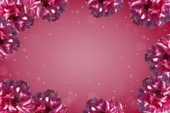Purper kader van rozen Stock Fotografie