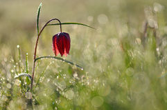 Purper-witte bloem royalty-vrije stock afbeeldingen