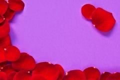 Purpere achtergrond met roze bloemblaadjes Stock Foto
