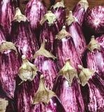 Purpere aubergine stock foto's