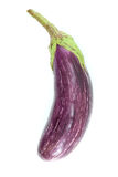 Purpere aubergine, op wit Stock Foto