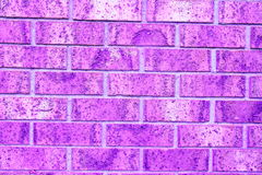 Purpere bakstenen muur Royalty-vrije Stock Foto