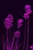 Purpere bladeren Stock Afbeelding