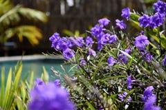 Purpere blauwe petunia helder en zonnig in een tuin royalty-vrije stock foto