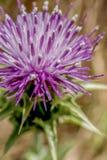 Purpere bloeiende bloem in landschap royalty-vrije stock foto's