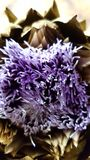 Purpere bloem stock foto