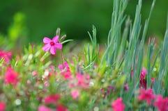 Purpere bloem Royalty-vrije Stock Foto