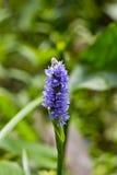 Purpere bloem Royalty-vrije Stock Afbeeldingen