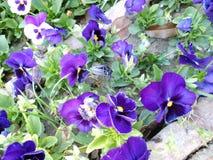 Purpere bloem Royalty-vrije Stock Foto's