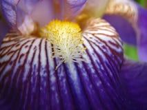 Purpere bloem Stock Fotografie