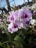 Purpere bloem bij schemer royalty-vrije stock afbeeldingen