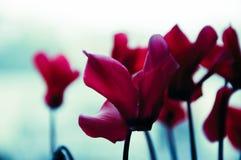 Purpere bloem dichtbij stock afbeelding