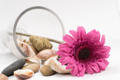 Purpere bloem die op witte achtergrond liggen Stock Foto's