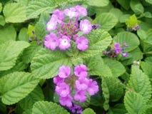 Purpere bloem een boeket Royalty-vrije Stock Foto's