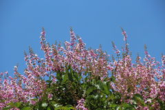 Purpere bloem en blauwe hemel Stock Foto
