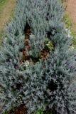 Purpere bloem met achtergrondaard Stock Foto's