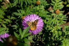 Purpere bloem met vlinder stock afbeeldingen